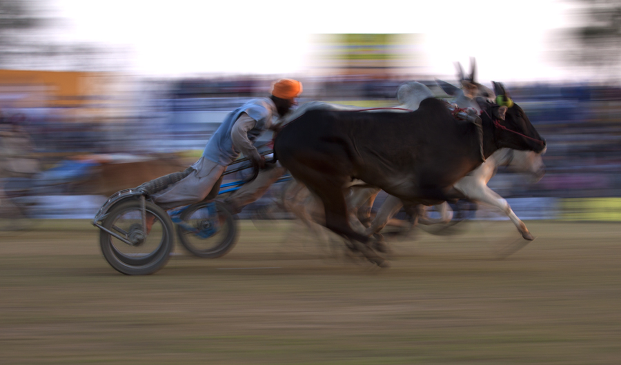 """<img src=""""bullock cart race.jpeg"""" alt=""""best escorted and curated photo tour of punjab kilaraipur rural games, campervan offers best accommodation place to stay at kilaraipur"""">"""