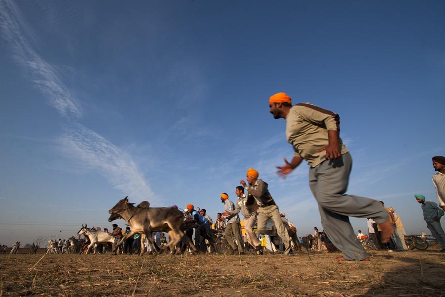"<img src=""bulloack cart race.jpeg"" alt=""best escorted and curated photo tour of punjab kilaraipur rural games, caravan campervan RV offers best place to stay at kilaraipur punjab india"">"