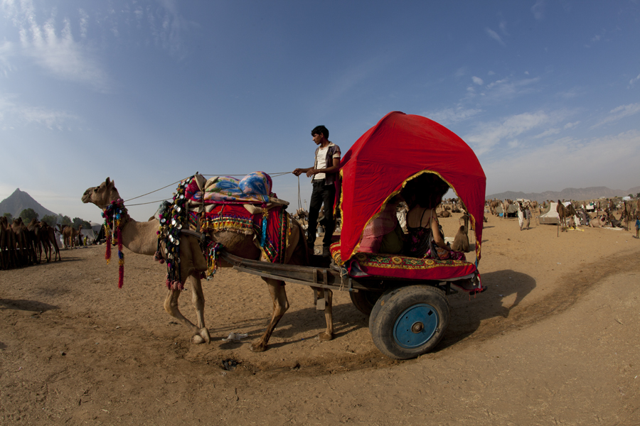 "<img src=""camel cart ride pushkar.jpeg"" alt=""luxury nomadic unique experience of outdoor overlanding camp for best photography of camels at pushkar quiet secluded place next camel ground very intimate experience"">"