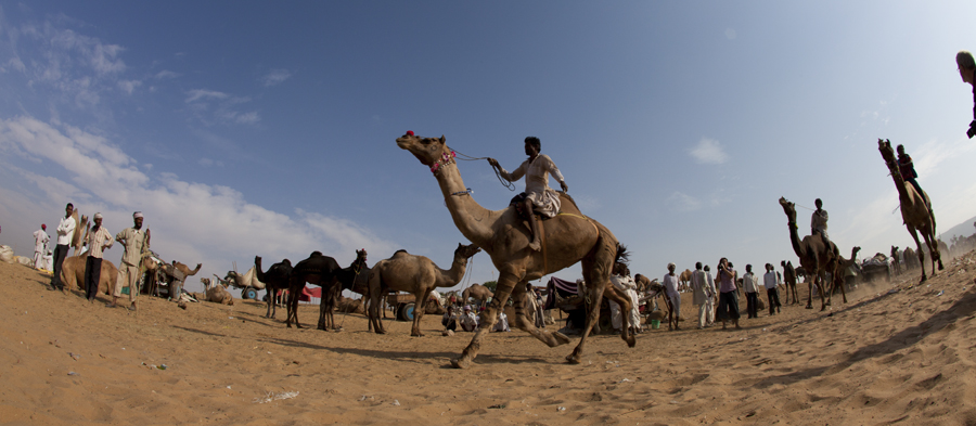 "<img src=""photographer shooting pushkar.jpeg"" alt=""luxury nomadic unique experience of outdoor overlanding camp for best photography of camels at pushkar quiet secluded place next camel ground very intimate experience"">"