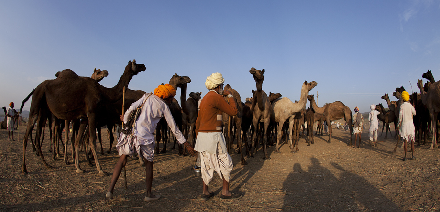 "<img src=""camel traders at pushkar.jpeg"" alt=""luxury campervan camp caravan rv motorhome nomadic unique experience of outdoor overlanding camp for best photography at pushkar quiet place at secluded places next camel ground unique photo tour"">"