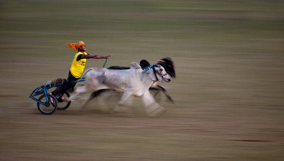 """<img src=""""bulloack cart race.jpeg"""" alt=""""best escorted and curated photo tour of punjab kilaraipur rural games, campervan offers best place to stay at kilaraipur"""">"""
