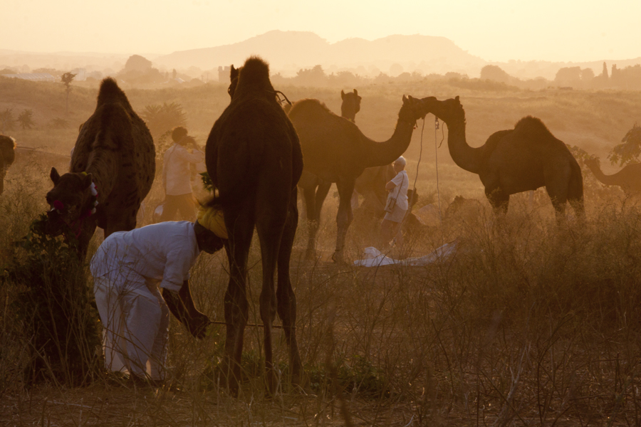 "<img src=""photo tour photography pushkar.jpeg"" alt=""luxury nomadic unique experience of outdoor overlanding camp for best photography of camels at pushkar quiet secluded place next camel ground very intimate experience"">"