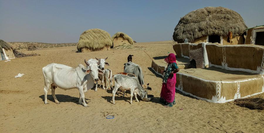 "<img src=""border village rajasthan.jpeg"" alt=""village and virgin pristine sand dunes village life at its best"">"