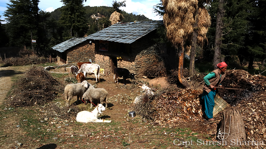 """<img src=""""caravan holidays rural life of himachal HP.jpeg"""" alt=""""rural india best in himachal campervan camping vacation overlanding overland truck vanlife campexperience wilderness motorhome rv for best family holiday and couplehimachal pradesh india"""">"""
