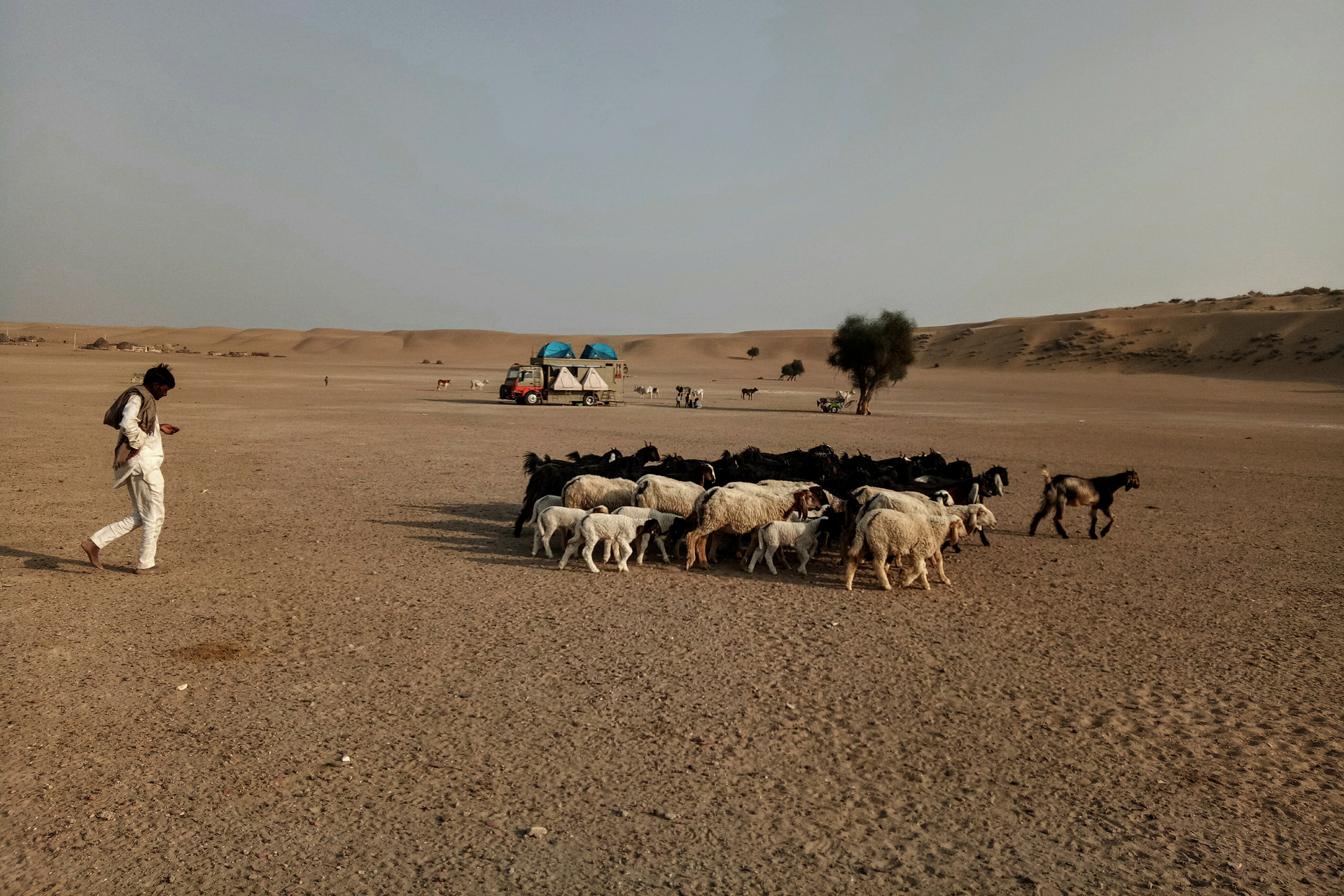 Taurus And Sand Dune Shepherd with Goats